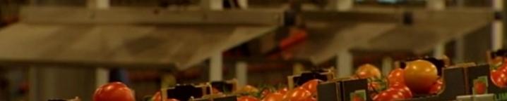 pomidory-2-tv